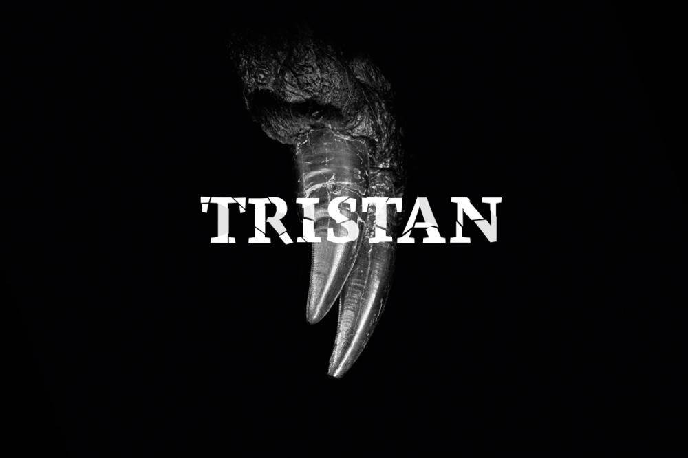 ausstellung_tristan_c_carola-radke-mfn